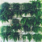 Our sexy plant wall. SO GREEN SO FRESH!