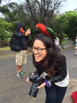 Attack of the Aussie parrots, pt. 2!